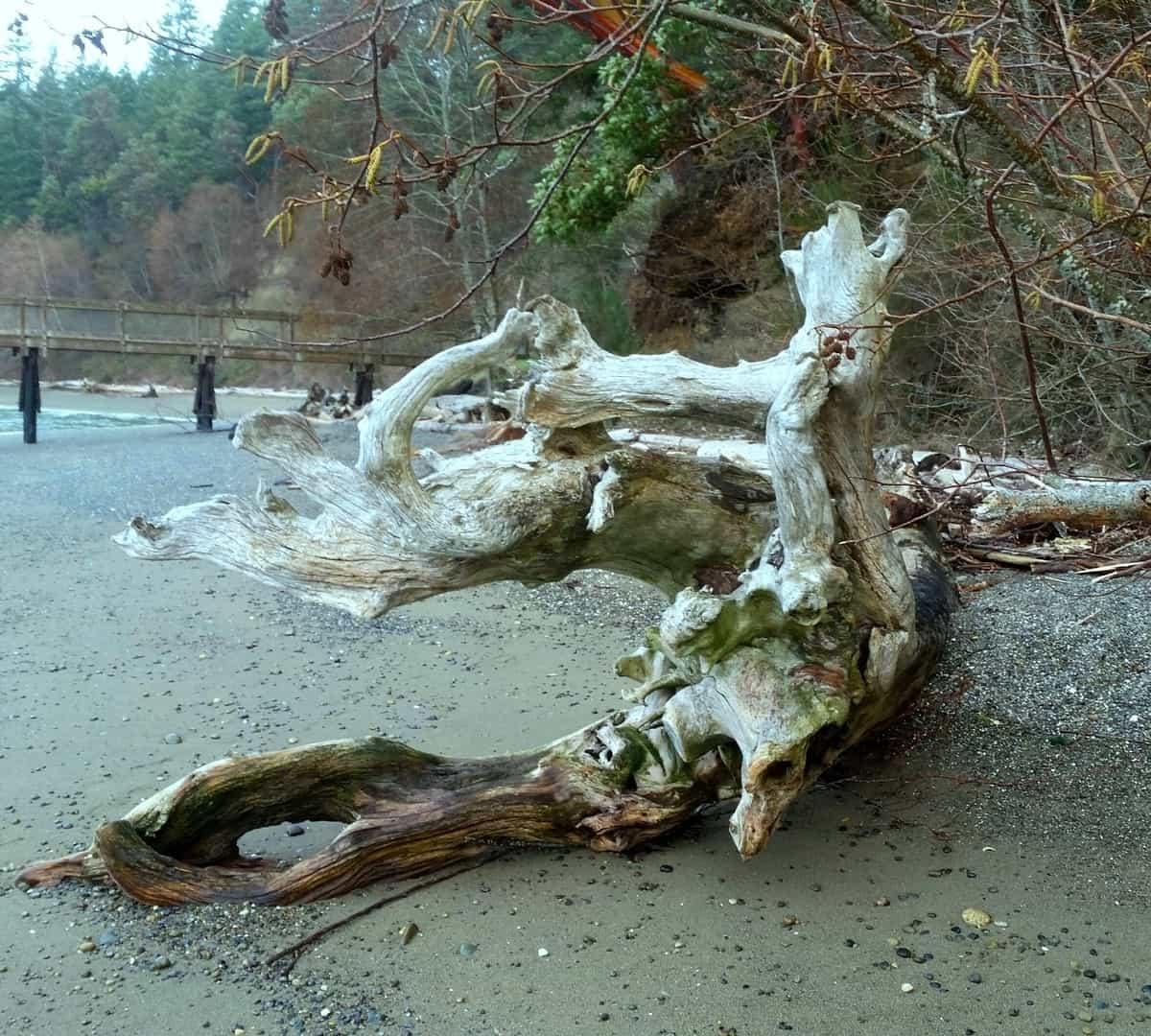 driftwood image